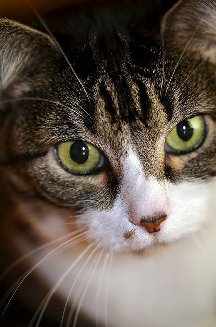 """""""Most people with cats know they are being controlled.  That's the horror of it...."""" --Anonymous"""