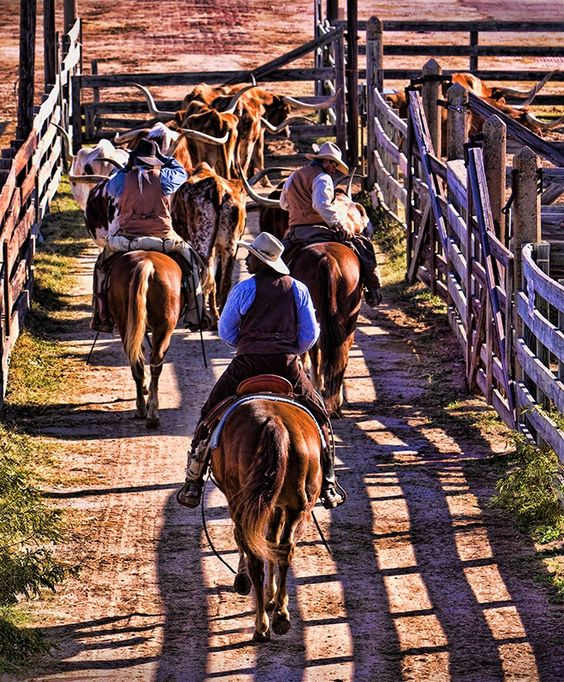 """""""Rounding Them Up"""" These Cowboys were working a herd of Texas Longhorns through the gates in Fort Worth, Texas. photo by Jeff W. Robinson"""