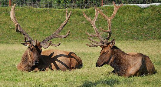 forêt nationale de chugach, Alaska | Anchorage Chugach National Forest (Alaska)…