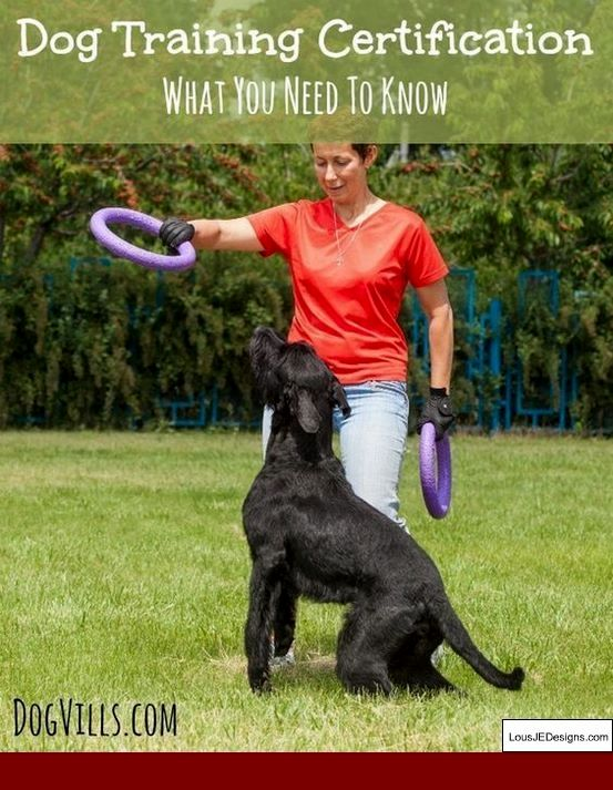 How To Train Dog Not To Bark Reddit And Pics Of How To Train Your