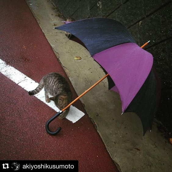 Japanese Cat with Grande Men's Pumpkin Umbrella by DiCesare Designs.