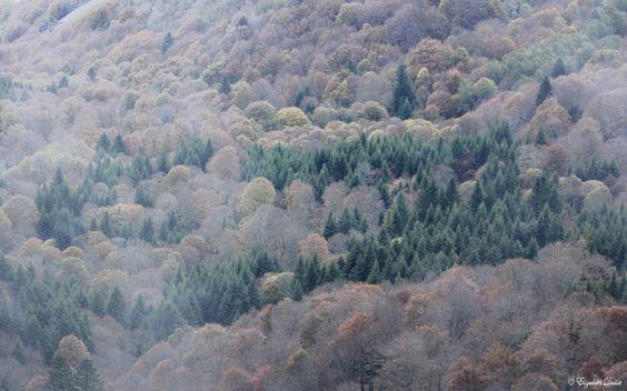 Légèrement vaporeuse, une aquarelle est née au cœur de la nature… Les sapins verts vont fêter l'hiver le 21 décembre