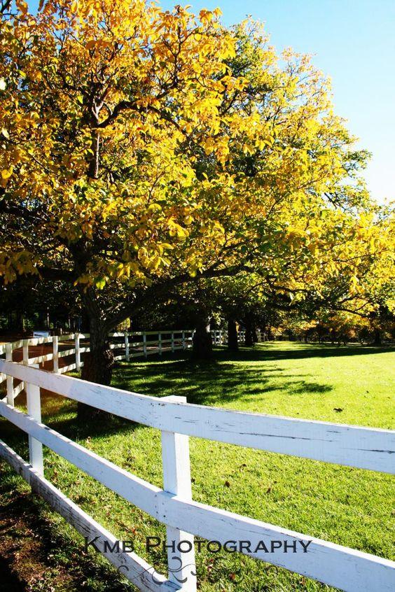Golden Orchard Fine Art Photo $17 by kmbphoto on #zibbet