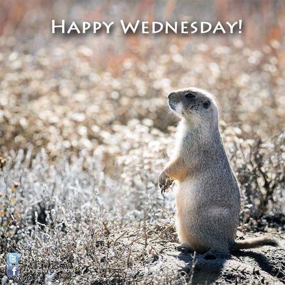 #Happy #Wednesday! <img src=