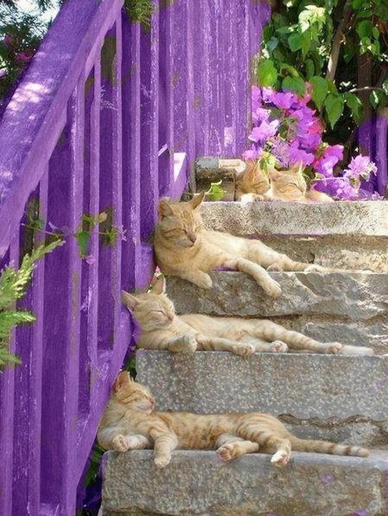AStuce soigner sont chat naturelle 8dbfab378b443480f0147589e9cd2957
