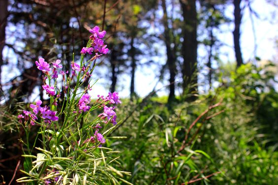 Photos of beautiful blooms of phlox in this blog post!