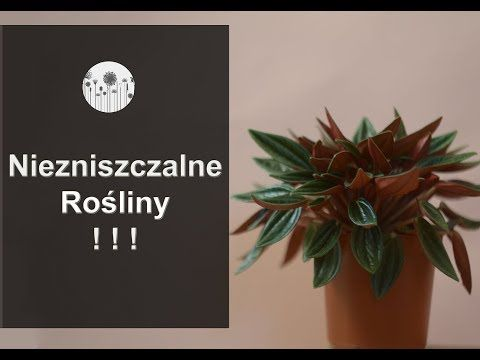 9 Niezniszczalnych Roslin Rosliny Domowe Ktore Ciezko Zabic Youtube Plants Lettering Home Decor