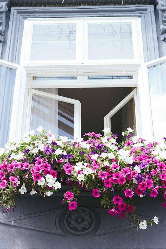 Untitled Window Box Balcony Flowers Flower Window