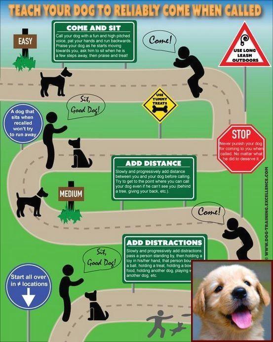 1 Have Dog Behavior Problems Learn About Dog Behavior Suddenly