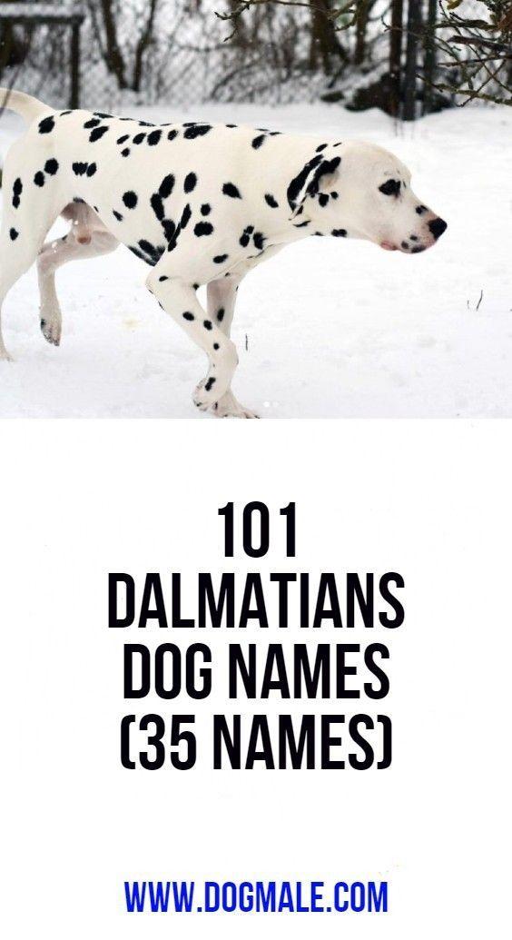101 Dalmatians Dog Names 35 Names Dog Names Dalmatian Dogs