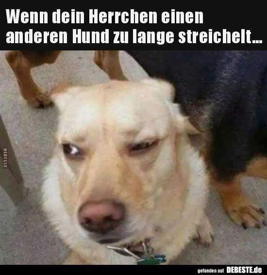 Doge Meme Ein Hund Aus Japan Erobert Das Internet