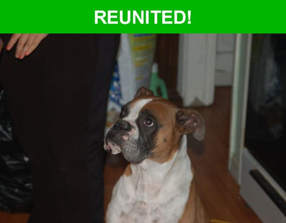 Great news! Happy to report that Aguila Or Chato has been reunited and is now home safe and sound! :)