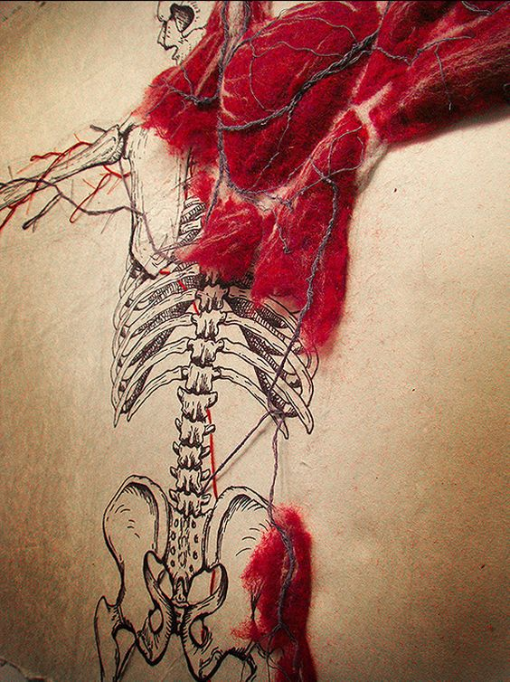 Wonderful illustrated skeletal system with stitched cardiovascular system and hand-felted muscle mass on handmade abaca paper by Dan Beckemeyer.