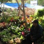 Candelaria – A time to renew the promise of Spring. It is Candelaria in San Miguel de Allende. It is time to prepare the earth for planting, to begin the renewal that is spring, and to plant the seeds for the miracle that is the risen Christ.