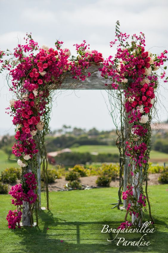 This wedding arch covered in bougainvillea is quite simply a jaw-dropper! | White Lilac Inc.: