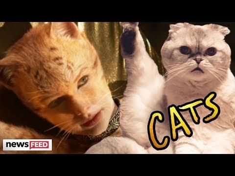 First Look At Taylor Swift In Cats Movie Trailer Cat Movie Movie Trailers Cats