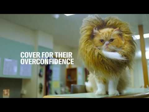 Racv Pet Insurance With Images Pets Pet Insurance Pitbull