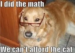 Doggy Knows His Math !! : ) #dogs