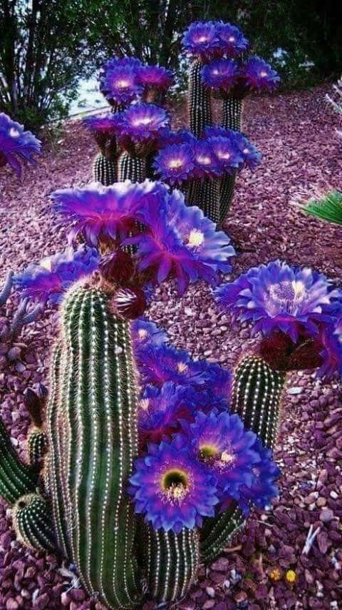 Wow!  What is the name of this beauty!? #Cactusflower