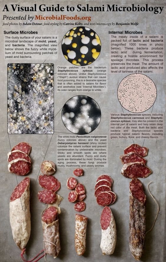 Loving this Salami Microbiology poster that you can download from ...