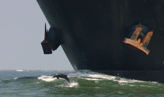 Le trafic maritime a engendré une pollution sonore pour les espèces marines. ©mhowry, Flickr, cc by 2.0