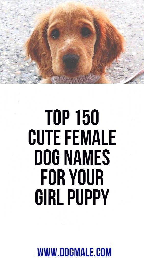 Icymi Top 150 Cute Female Dog Names For Your Girl Puppy Female Dog Names Cute Female Dog Names Dog Names