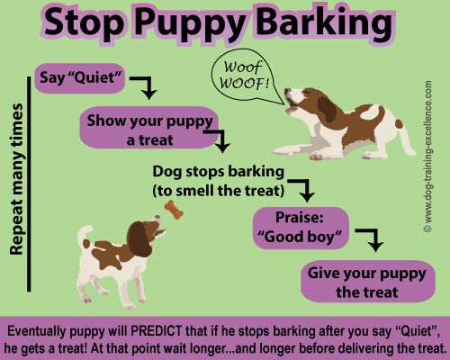 Stop puppy barking, teach your puppy to be quiet