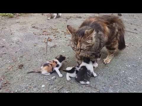 Youtube Kitten Meowing Cat Mom Baby Kittens