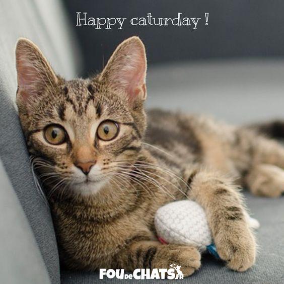 Happy caturday ! Bon chatmedi les amis  !!!  #chat #chats #foudechats #amoureuxdeschats #jaimeleschats #caturday