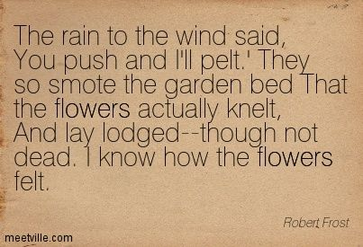 robert frosts wind and window flower Free robert frost papers, essays, and research papers my account search results the use of symbolism in robert frost's wind and window flower - the use of symbolism in robert frost's wind and window flower i interpreted this poem as a very sad one.
