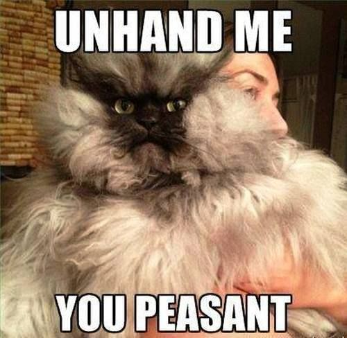 Unhand Me You Peasant Funny Cat Memes Angry Cat