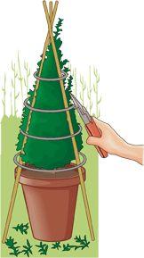 Consejos del mes 181. Árboles y arbustos. Dar forma a los arbustos