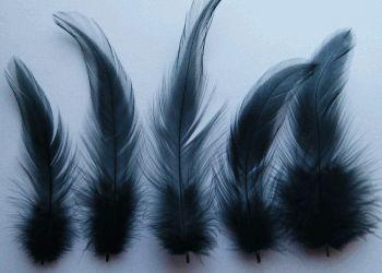 Feathers - Google-Suche