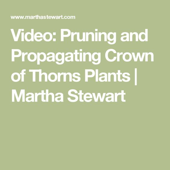 Video: Pruning and Propagating Crown of Thorns Plants | Martha Stewart