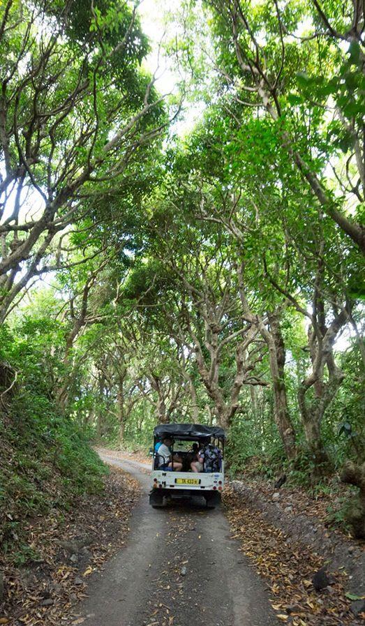 Go off-roading in St. Kitts.