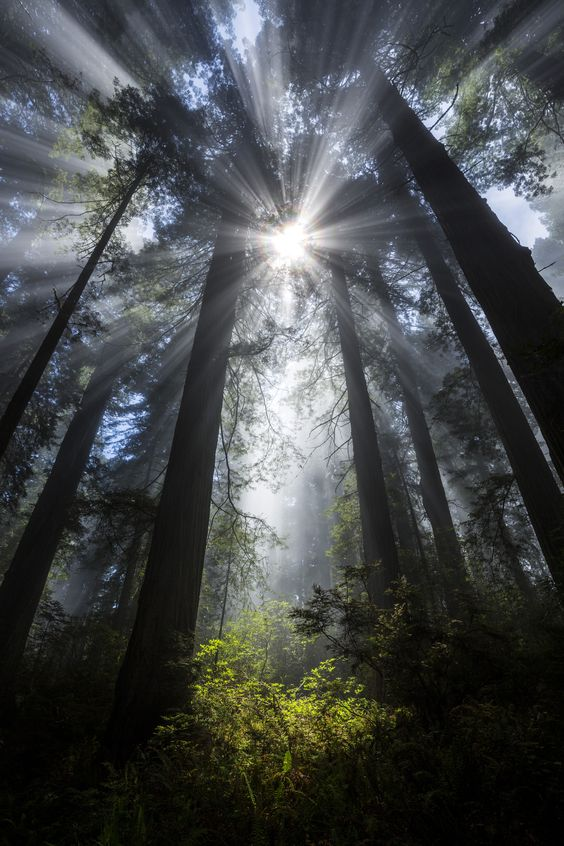 ~~Faerie Glade   Sunbeams and fog in the redwoods, Del Norte Coast Redwoods State Park, California   by Ian Plant~~