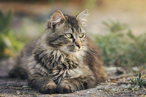 Pin By معرض لي كلما يتعلق بعالم القطط On Photography Pets Cats Cats Cheap Pets
