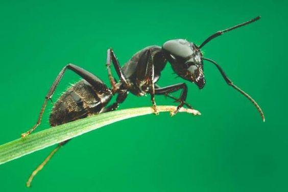 Las Hormigas. Anatomía y comportamiento #curiosidades #curiosfera @curiosfera