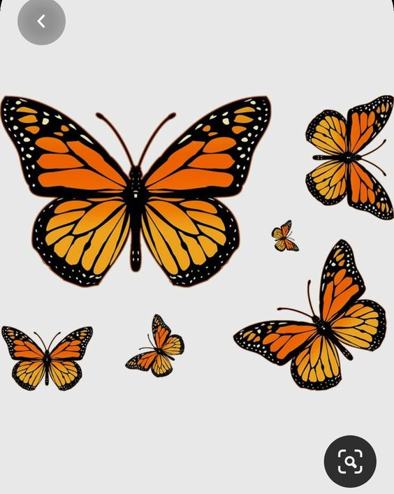 Pin De Nahir Villalba En Fundas Imagenes De Mariposas Bonitas Mariposa Monarca Mariposas Para Tatuar