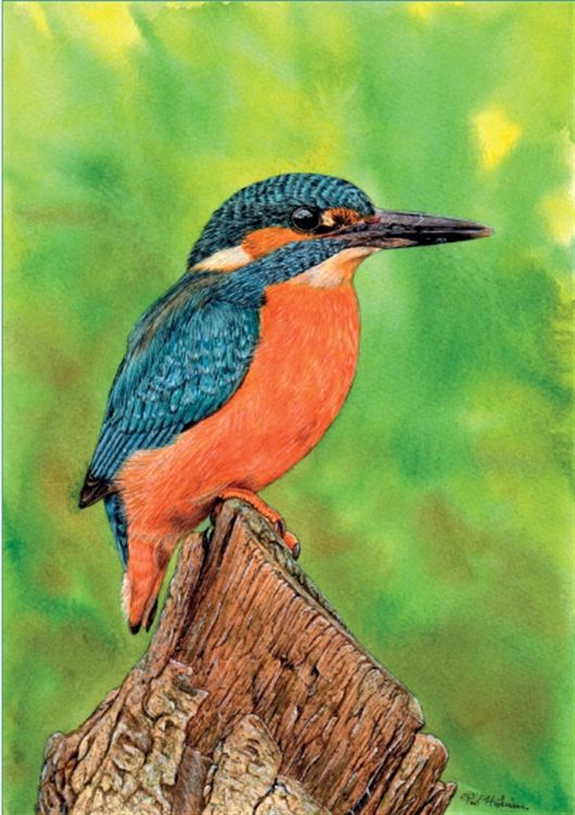 Step By Step Guide To Painting A Kingfisher In Watercolour By Paul
