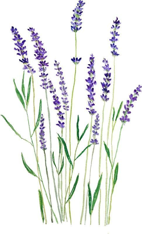 Most Current Totally Free Purple Flowers Lavender Tips Wie Man