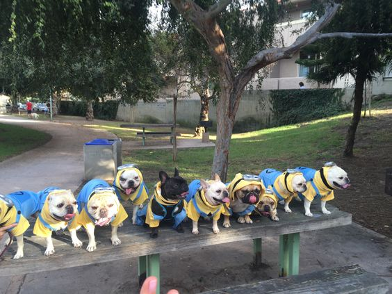Happy Wednesday from the Kinecta Frenchy minions! God bless