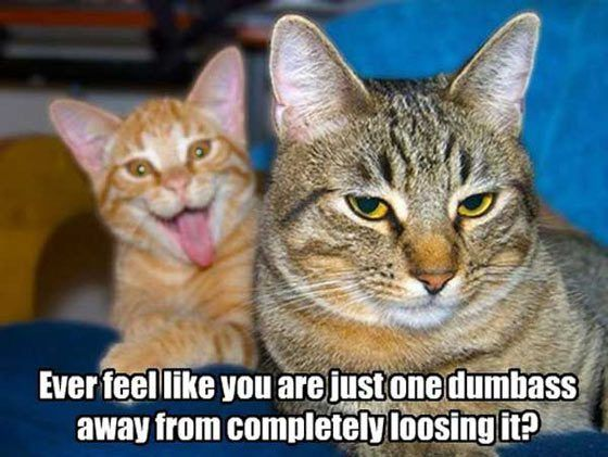 Hilarious Photobombs of Funny Animals #Humor on #Funvblog funny-cats-photobomb