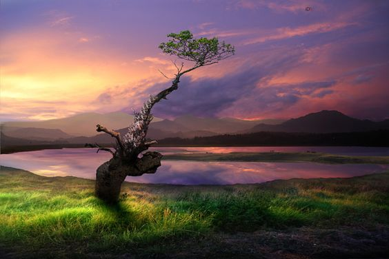 Standing alone by iD's