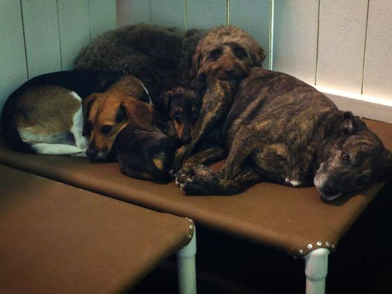 Cuddle time at HHP on a cold Northern VA afternoon for Allie, Tweak, Obie, and Bo. It's a hodgepodge of doggie day nap time! www.HealthyHoundPlayground.com