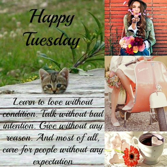 Happy Tuesday💚 Learn to love without condition. Talk without bad intention. Give without any reason. And most of all, care for people without any expectation.