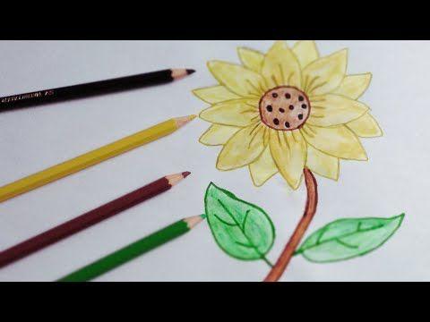 Cara Menggambar Bunga Matahari Youtube Menggambar Bunga Matahari Menggambar Bunga Cara Menggambar