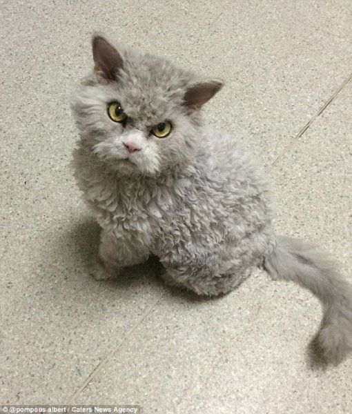 They Call Him The Angriest Looking Cat In The World. After Seeing His Photos, You'll Know Why   facebook