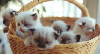 because who /doesn't/ want a basket of kittens?