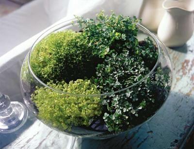 Gardens herbs garden and glasses on pinterest for Indoor gardening glasses